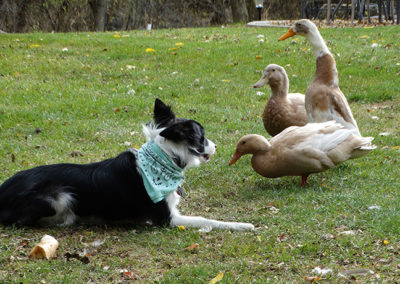 Dog Fowl - Royal Roost
