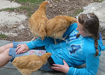 Chloe with Chickens - Royal Roost