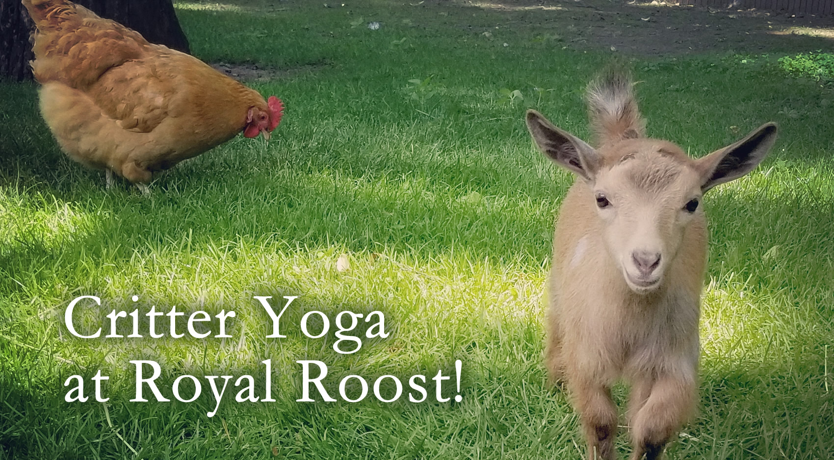 Critter Yoga at Royal Roost event